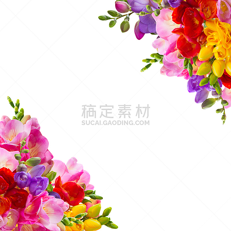 清新,小苍兰,自然,绿色,无人,蓝色,方形画幅,自然美,白色,黄色