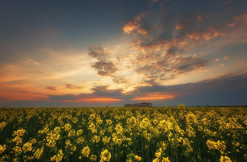 油菜花,夏天,田地,地形,黑云压城,反差,非凡的,宏伟,积雨云,日落