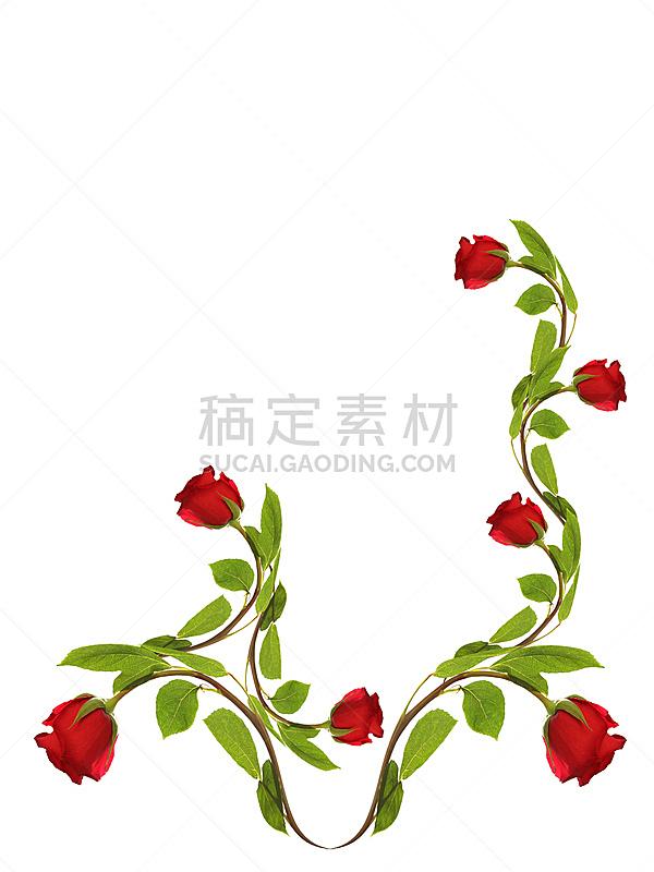 玫瑰,背景,白色,华丽的,贺卡,清新,背景分离,边框,浪漫,情人节卡