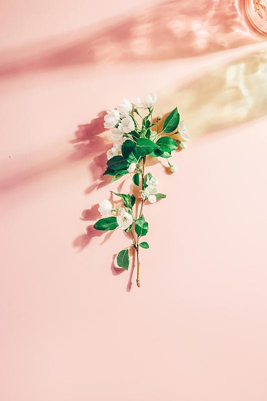 春天,背景,粉色,苹果树,彩色图片,固体,阴影,荧光笔,简单,花