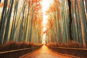 竹林,京都府,日本,岚山,竹,竹子,橙色,黎明,户外