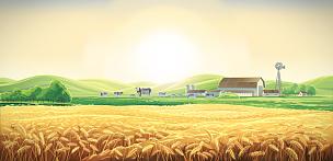 农场,母牛,夏天,地形,农业,草,动物,牛肉,草地