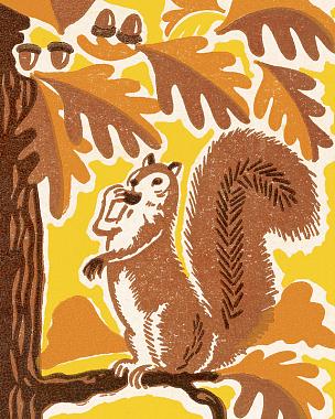 松鼠,自然,季节,秋天,垂直画幅,野生动物,环境,图像,一只动物,枝