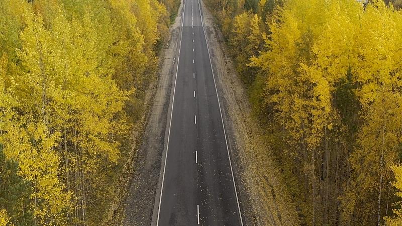 公路,晴朗,黄色,白昼,秋天,风景,路,森林,背景聚焦,上装