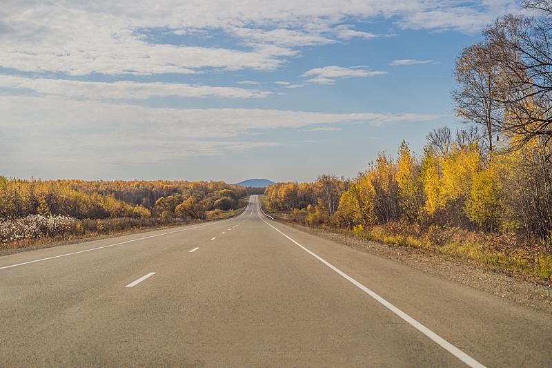 沥青,自然,秋天,风景,背景,日光,地形,森林,旅行,树