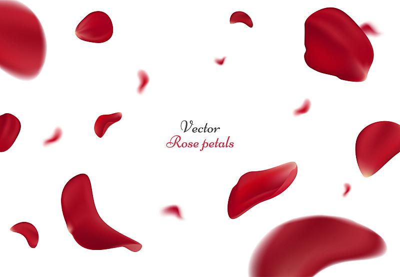 贺卡,情人节,绘画插图,矢量,美,式样,玫瑰,白色背景,红色,花瓣