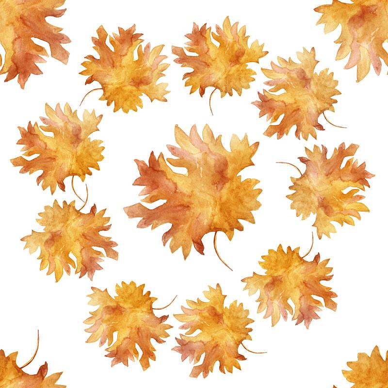 四方连续纹样,枫叶,秋天,分离着色,色彩鲜艳,水彩画,圆形,白色背景,舞蹈,九月