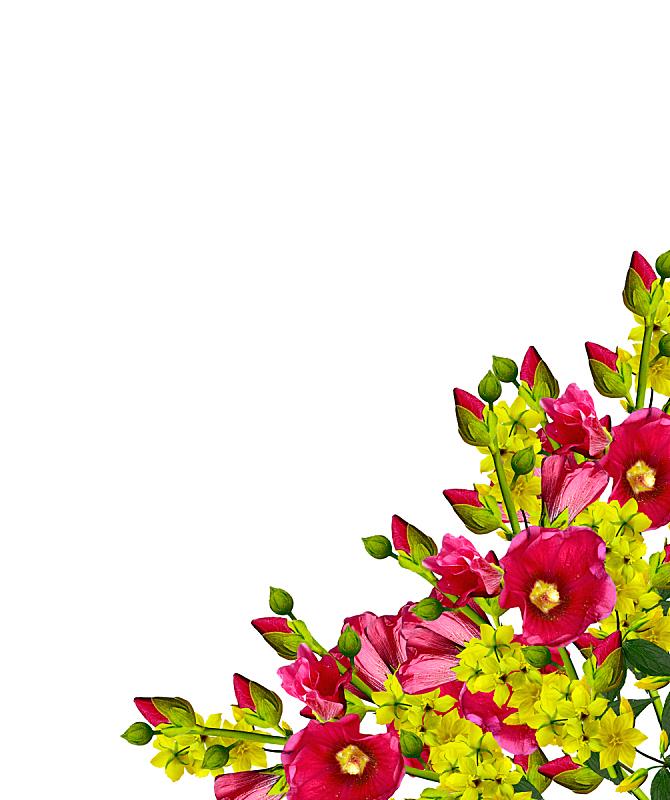 花束,多色的,明亮,一个物体,背景分离,自然神力,壁纸,草,春天,植物