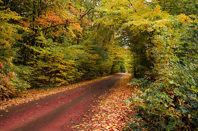 自然美,地形,路,秋天,森林