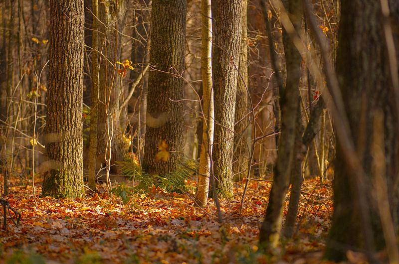 地形,自然美,日光,森林,秋天,非凡的,风景,摄影