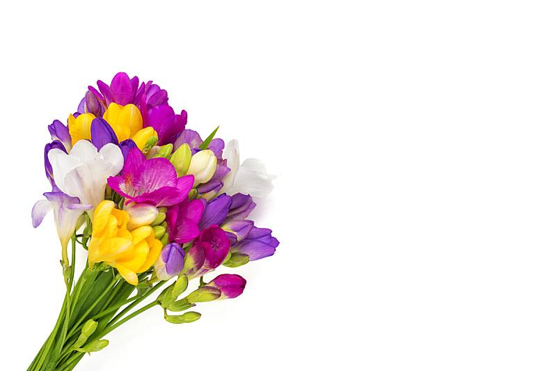 花束,分离着色,小苍兰,平铺,花,贺卡,在上面,白色背景,节日,花