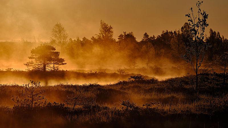 秋天,雾,森林,早晨,背景,自然,拉脱维亚,东欧,图像,无人