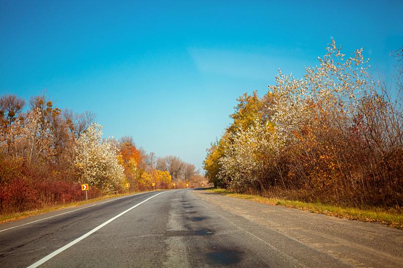 公路,自然,白昼,秋天,路,地形,太阳,平衡折角灯,生长,树