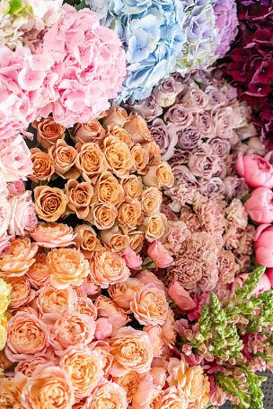 背景,地毯,多样,目录,留白,概念,自然美,商店,花,递送