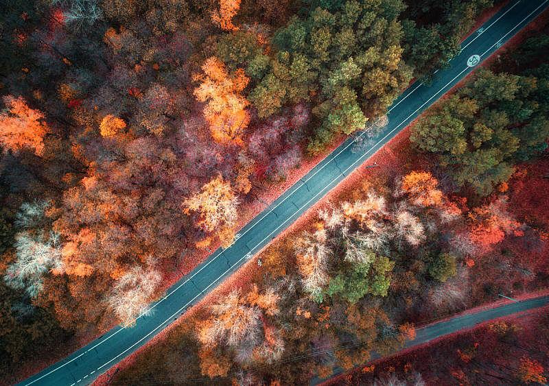 公路,红色,秋天,风景,叶子,多色的,路,橙色,在上面,无人