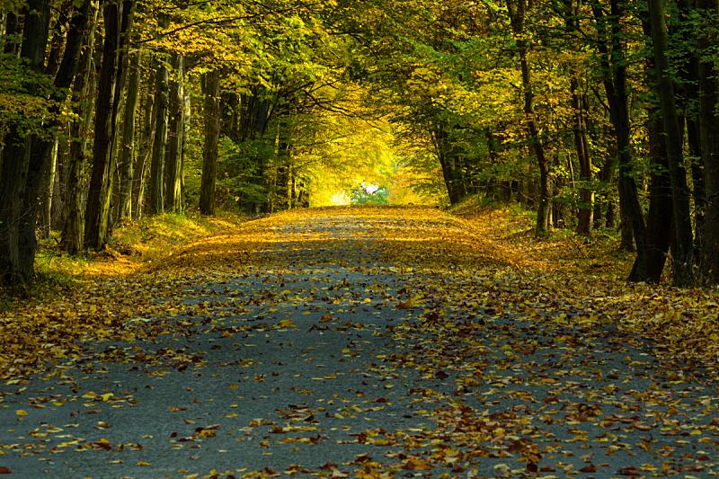 叶子,路,摩拉维亚,森林,秋天,大群动物,照亮