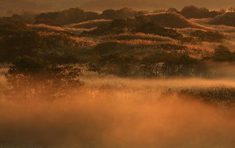 黎明,秋田县,湿地,桨叉架船,自然,旅途,草原,秋天,风景,图像