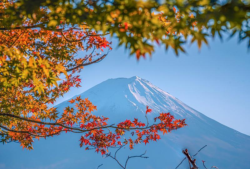 富士山,背景,天空,富士河口湖,日本,秋天,叶子,蓝色,白昼,雪