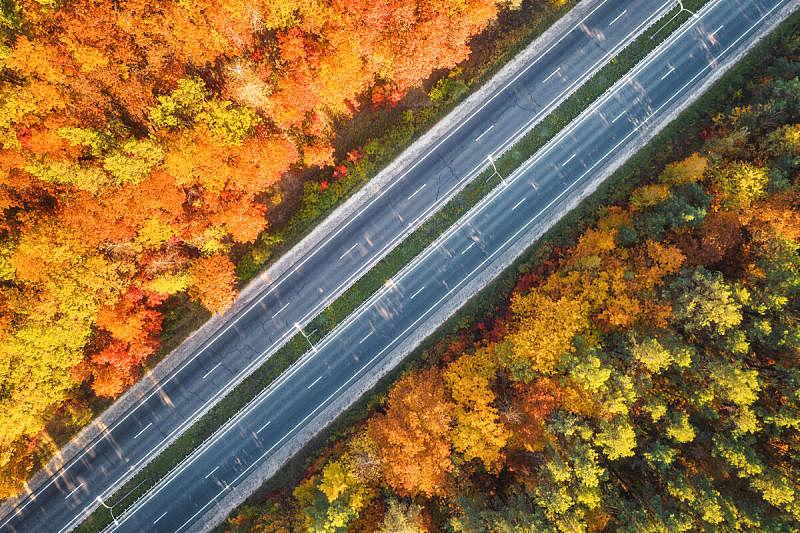 公路,红色,秋天,风景,叶子,多色的,树林,路,看风景,空的