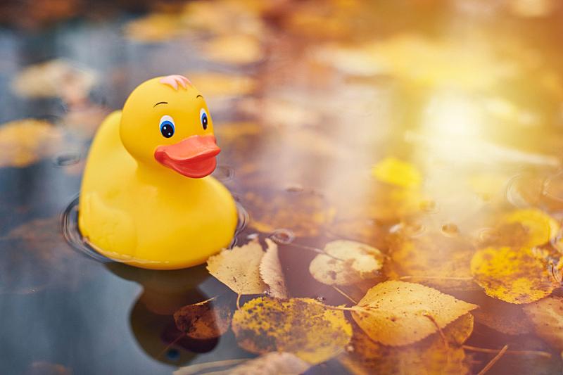 叶子,鸭子,秋天,玩具,水坑