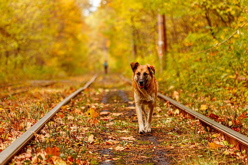 古典式,秋天,乌克兰,森林,豺狗,有轨电车,平衡折角灯,基辅,城市生活,公园