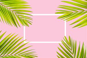 白色,粉色背景,边框,棕榈叶,自然,彩色蜡笔,清新,彩色背景,热带气候