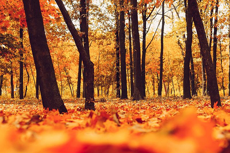 十月,黄色,秋天,叶子,路,日光,地形,森林,公园,树