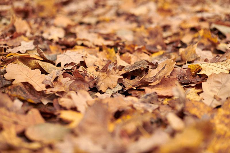 叶子,秋天,城市,公园
