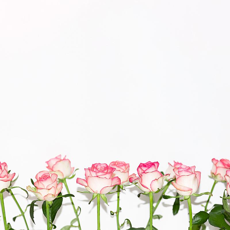 白色,玫瑰,粉色,广口瓶,背景,桌子,白色背景,旅游目的地,锻炼,排列