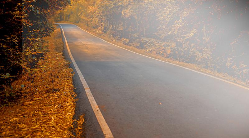 秋天,全景,路,阳光光束,自然美,树冠,3到4个月,户外,创作行业,晴朗
