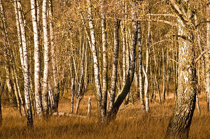 停泊的,自然,秋天,德国,居住区,,平衡折角灯,浮木,草,草皮