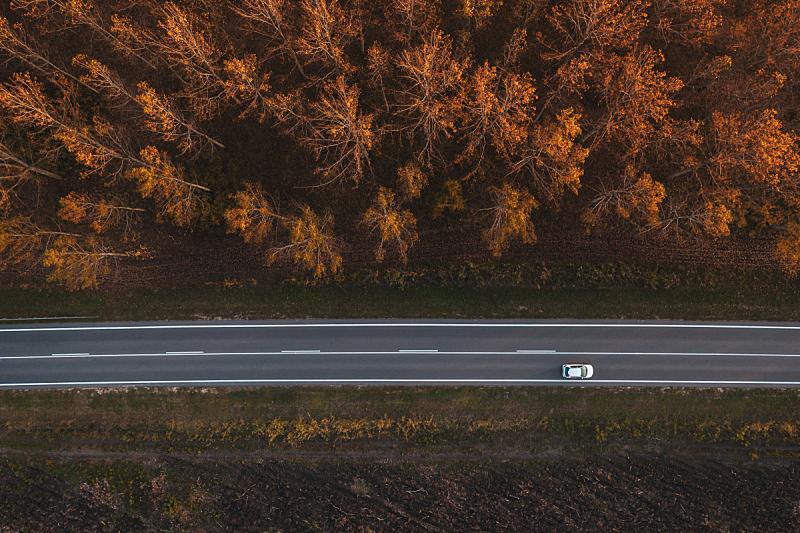 秋天,白杨类,在活动中,交通,森林