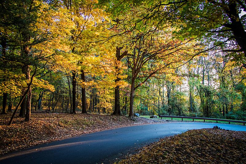 早晨,地形,秋天,蜿蜒,宾夕法尼亚,户外,自然,黄色,季节,摄影