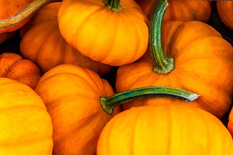 葫芦,无人,十月,秋天,图像,南瓜,水平画幅,美国,摄影