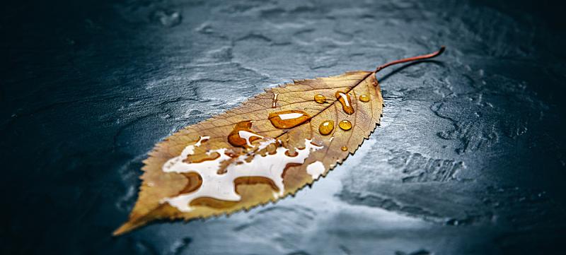 季节,绿色,十一月,叶子,黄色,纹理,秋天,颜色,明信片,摄影