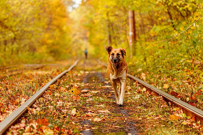 古典式,秋天,乌克兰,森林,平衡折角灯,豺狗,有轨电车,基辅,城市生活,公园
