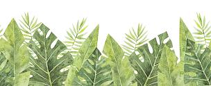 叶子,国境线,鸡尾酒,请柬,贺卡,水彩画颜料,边框,热带气候,枝繁叶茂,自然美