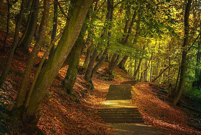 秋天,叶子,台阶,地形,森林,阳光光束,欧洲赤松,太阳,树,显现