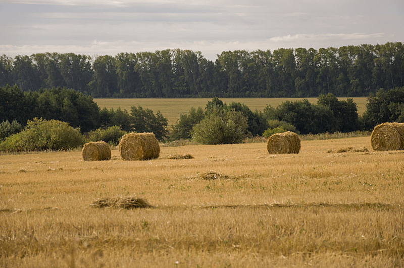 云,草地,黄金,天堂,远距离,秋天,森林,暗色,干的,在上面