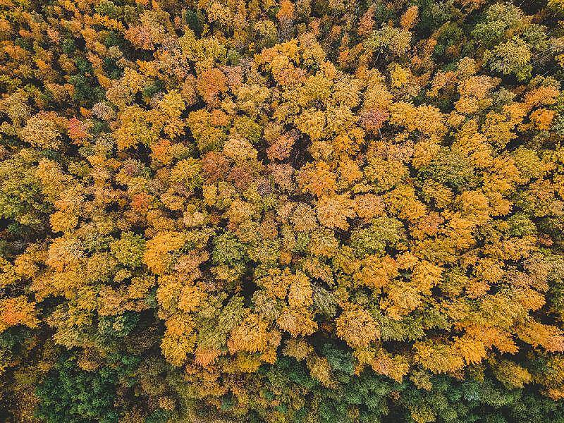 北,秋天,松木,杉树,地形,森林,落叶树,气候,云,草