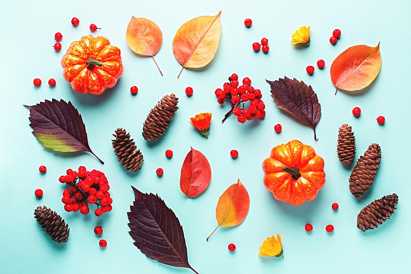 橙色,松果,平铺,秋天,概念,南瓜,花楸浆果,叶子,背景聚焦
