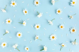 风景,式样,花瓣,平铺,蓝色背景,美,贺卡,水平画幅,无人,夏天