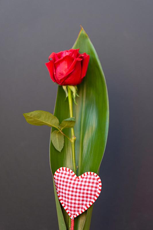 玫瑰,红色,分离着色,黑色背景,传统,周年纪念,事件,热情,母亲,浪漫