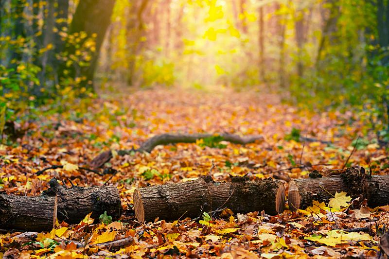 色彩鲜艳,树干,秋天,路,森林,堆,橡树,可再生能源,木料堆,环境
