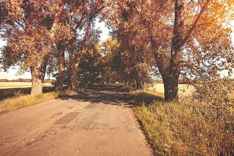 自然,白昼,秋天,路,乡村路,地形,太阳,平衡折角灯,树,生长