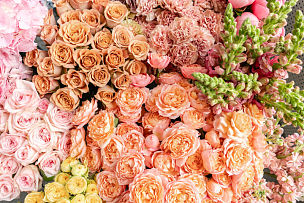 背景,地毯,多样,目录,概念,自然美,网上商店,留白,花,递送