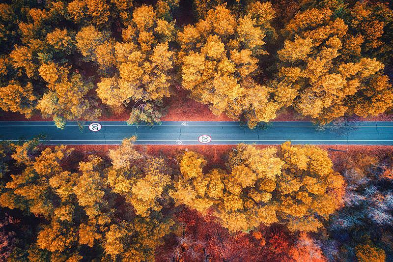 公路,色彩鲜艳,自然,红色,秋天,风景,叶子,树林,路,空的