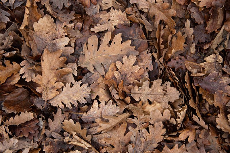 背景,秋天,十月,橙色,植物,纹理,木制,离开,摄影