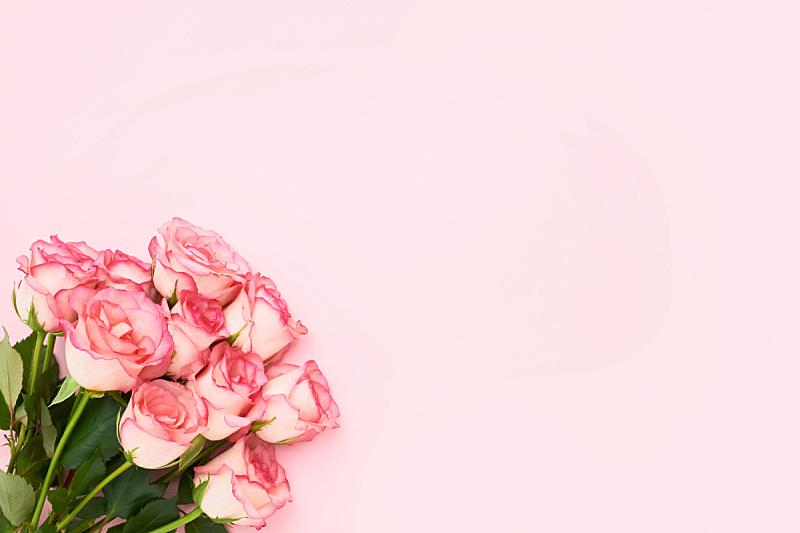 留白,花束,情人节,玫瑰,生日,概念,贺卡,粉色,粉色背景,母亲节
