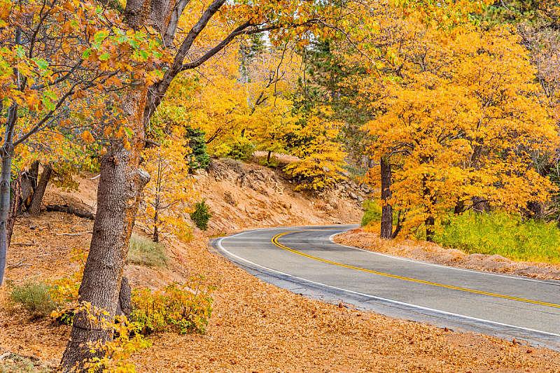 巨熊湖,加利福尼亚,秋天,路,森林,圣伯那丁诺,橡树林地,线条,沥青,南加利福尼亚